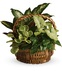 Emerald Garden Basket from In Full Bloom in Farmingdale, NY
