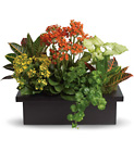 Stylish Plant Assortment  from In Full Bloom in Farmingdale, NY