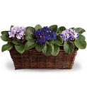 Sweet Violet Trio from In Full Bloom in Farmingdale, NY