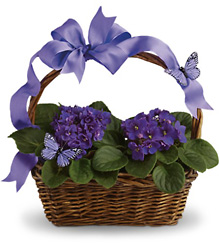 Violets And Butterflies from In Full Bloom in Farmingdale, NY