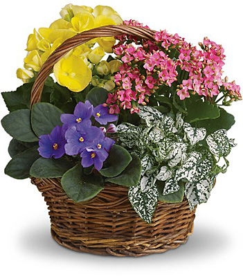 Spring Has Sprung Mixed Basket from In Full Bloom in Farmingdale, NY