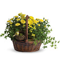 Yellow Trio Basket from In Full Bloom in Farmingdale, NY