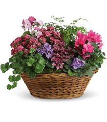 Simply Chic Mixed Plant Basket from In Full Bloom in Farmingdale, NY